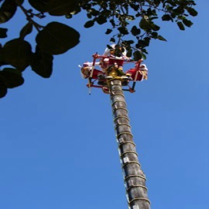Maya voladores about to launch & spin down